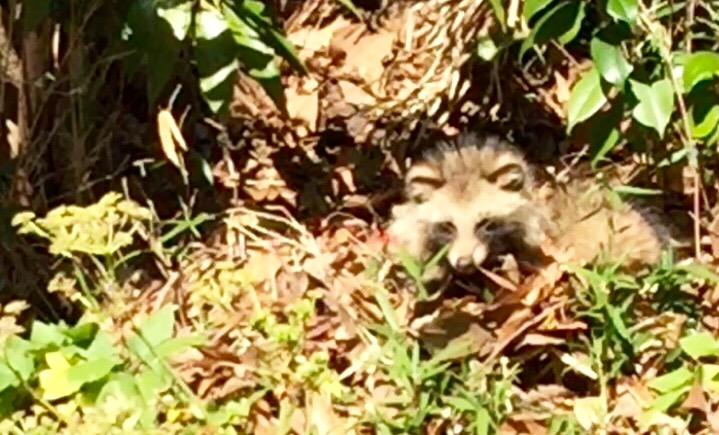 鎌倉暮らし。家の近所で見かける動物たち